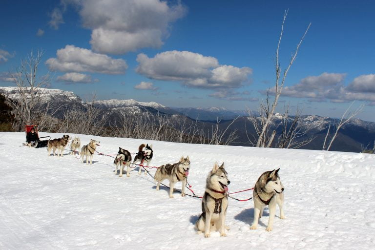 Huskies pulling a sled through the snow